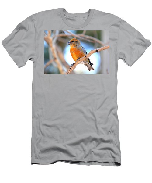 Red Crossbill On Aspen Men's T-Shirt (Slim Fit) by Marilyn Burton