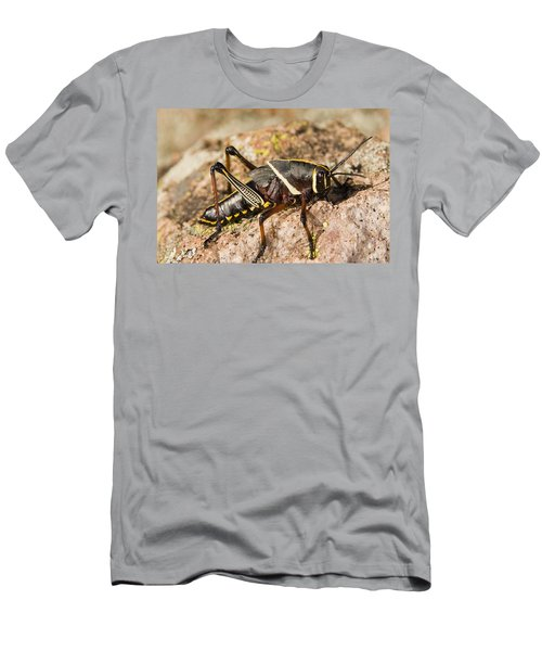 A Colorful Lubber Grasshopper Men's T-Shirt (Slim Fit) by Jack Goldfarb