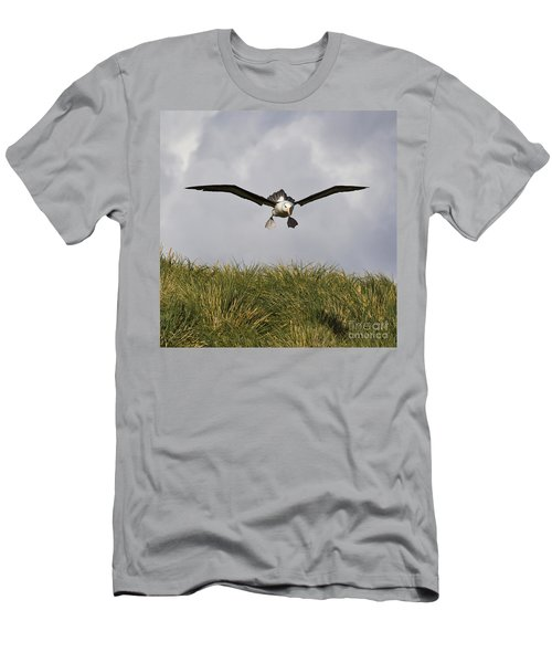 Black-browed Albatross Men's T-Shirt (Slim Fit) by Jean-Louis Klein & Marie-Luce Hubert