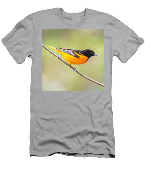 Baltimore Oriole Men's T-Shirt (Slim Fit) by Paul Freidlund