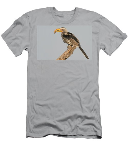 Southern Yellow-billed Hornbill Tockus Men's T-Shirt (Slim Fit) by Panoramic Images