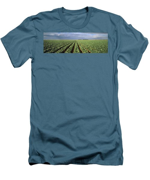 Agriculture - A Field Of Mid Growth Men's T-Shirt (Slim Fit) by Timothy Hearsum