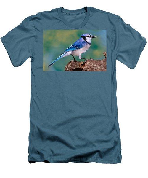 Blue Jay Men's T-Shirt (Slim Fit) by Millard H. Sharp