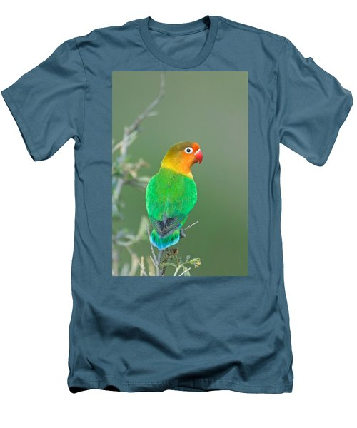 Close-up Of A Fischers Lovebird Men's T-Shirt (Slim Fit) by Panoramic Images