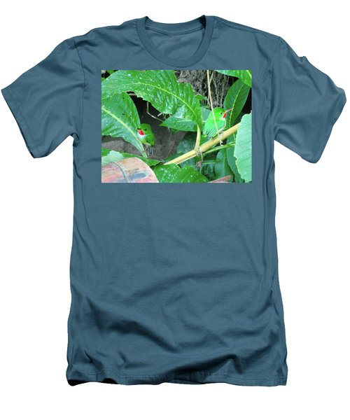 Jamaican Toadies Men's T-Shirt (Slim Fit) by Carey Chen