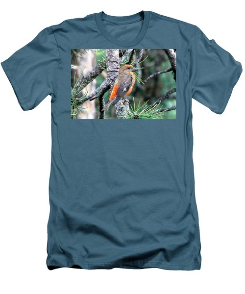 Red Crossbill On Pine Tree Men's T-Shirt (Slim Fit) by Marilyn Burton