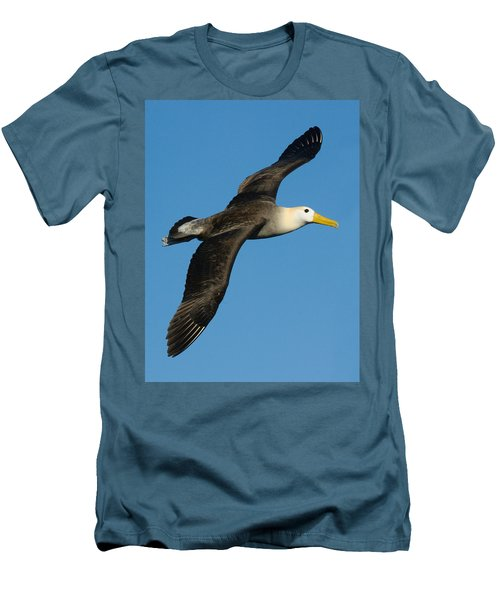 Waved Albatross Diomedea Irrorata Men's T-Shirt (Slim Fit) by Panoramic Images