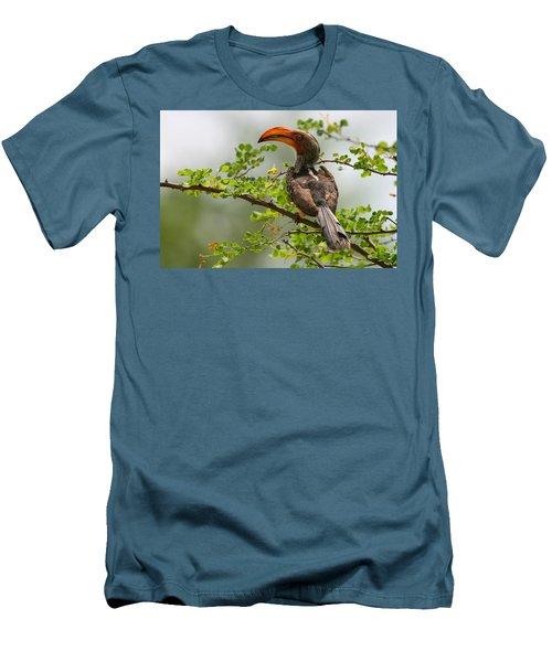 Yellow-billed Hornbill Men's T-Shirt (Slim Fit) by Bruce J Robinson