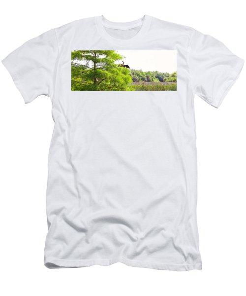 Anhinga Anhinga Anhinga On A Tree Men's T-Shirt (Slim Fit) by Panoramic Images