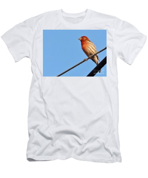 American Crossbill On Wire     Spring   Indiana   Men's T-Shirt (Slim Fit) by Rory Cubel