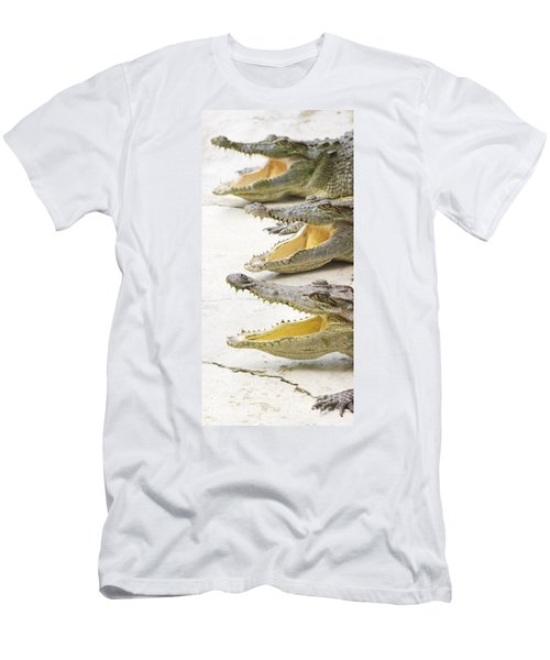 Crocodile Choir Men's T-Shirt (Slim Fit) by Jorgo Photography - Wall Art Gallery