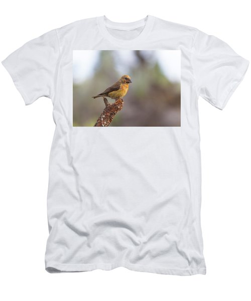Juvenile Male Red Crossbill Men's T-Shirt (Slim Fit) by Doug Lloyd