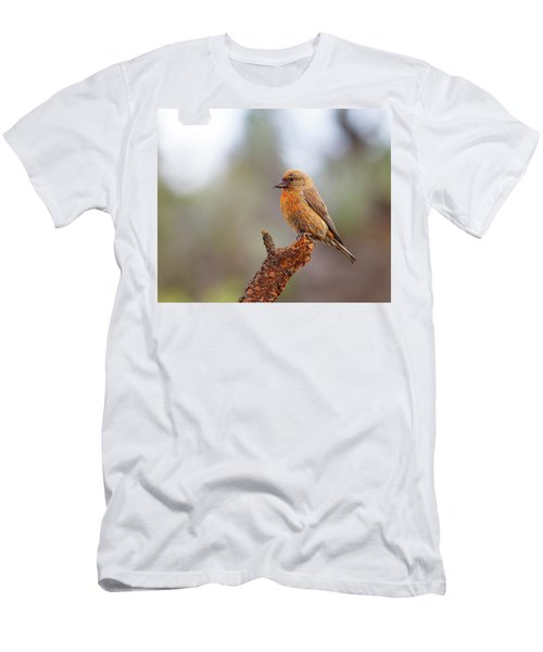 Male Red Crossbill Men's T-Shirt (Slim Fit) by Doug Lloyd