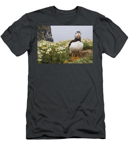 Atlantic Puffin In Breeding Plumage Men's T-Shirt (Slim Fit) by Sebastian Kennerknecht