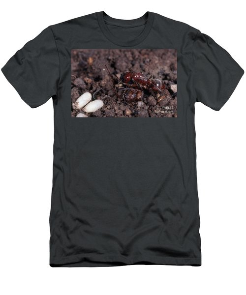 Ant Queen Fight Men's T-Shirt (Slim Fit) by Gregory G. Dimijian, M.D.