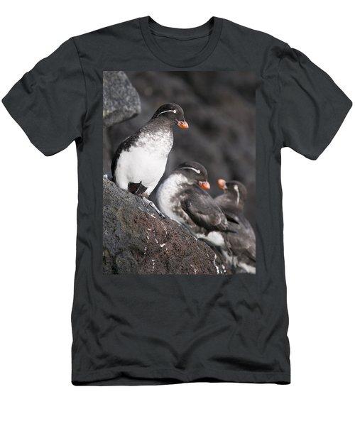 Group Of Parakeet Auklets, St. Paul Men's T-Shirt (Slim Fit) by John Gibbens
