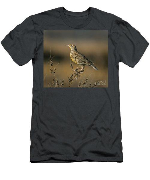 Meadowlark On Weed Men's T-Shirt (Slim Fit) by Robert Frederick