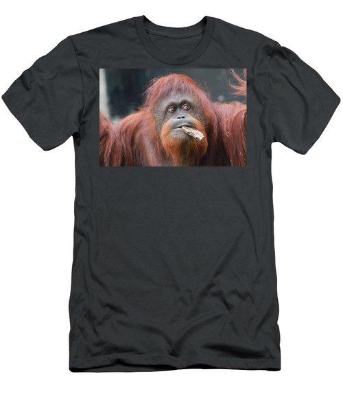Orangutan Portrait Men's T-Shirt (Slim Fit) by Dan Sproul