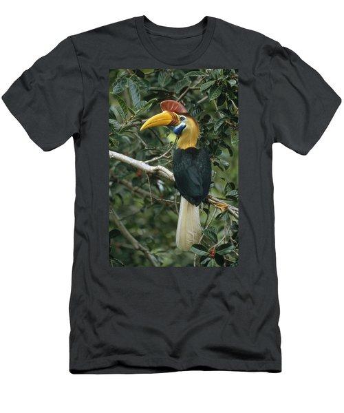 Sulawesi Red-knobbed Hornbill Male Men's T-Shirt (Slim Fit) by Mark Jones