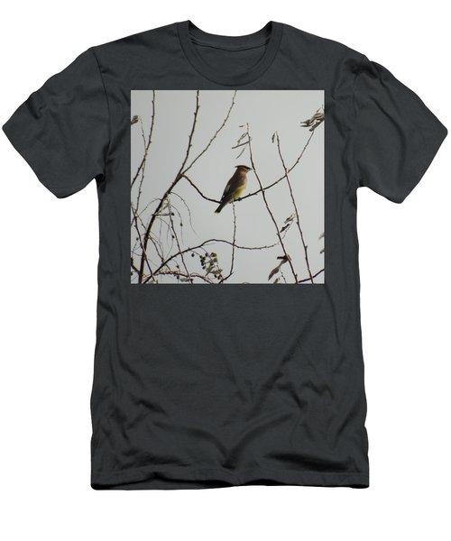 Cedar Wax Wing In Tree Men's T-Shirt (Slim Fit) by Kenneth Willis