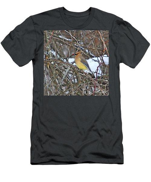 Cedar Wax Wing Men's T-Shirt (Slim Fit) by Robert Pearson