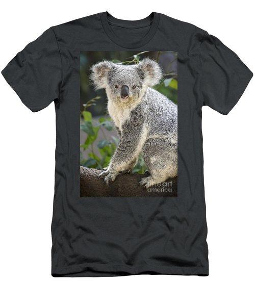 Female Koala Men's T-Shirt (Slim Fit) by Jamie Pham