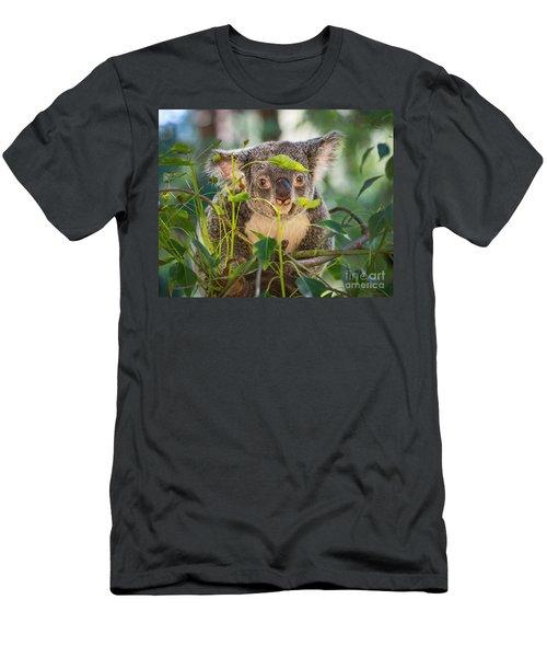 Koala Leaves Men's T-Shirt (Slim Fit) by Jamie Pham
