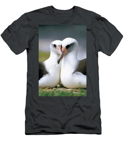 Laysan Albatross Phoebastria Men's T-Shirt (Slim Fit) by Tui De Roy