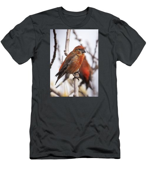 Male Red Crossbills Men's T-Shirt (Slim Fit) by Robert Potts