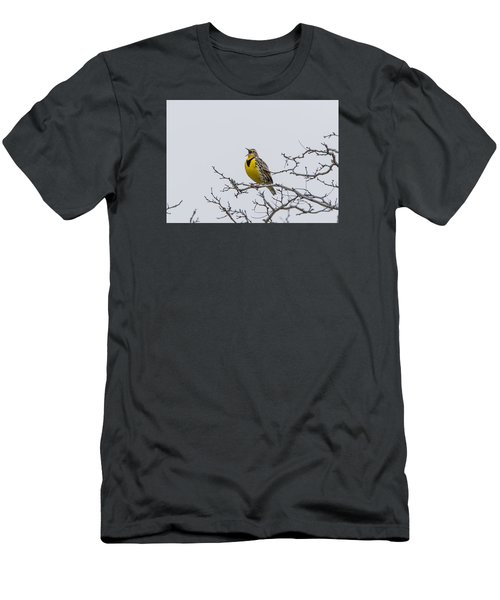 Meadowlark In Tree Men's T-Shirt (Slim Fit) by Marc Crumpler