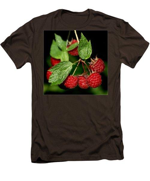 Raspberries Men's T-Shirt (Slim Fit) by Nikolyn McDonald