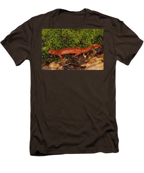 Red Salamander Pseudotriton Ruber Men's T-Shirt (Slim Fit) by Pete Oxford