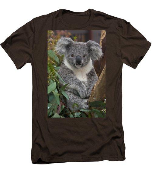 Koala Phascolarctos Cinereus Men's T-Shirt (Slim Fit) by Zssd