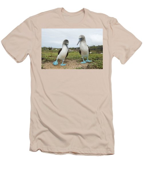 Blue-footed Booby Pair Courting Men's T-Shirt (Slim Fit) by Tui De Roy