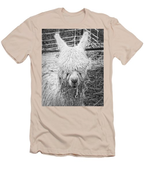 Black And White Alpaca Photograph Men's T-Shirt (Slim Fit) by Keith Webber Jr