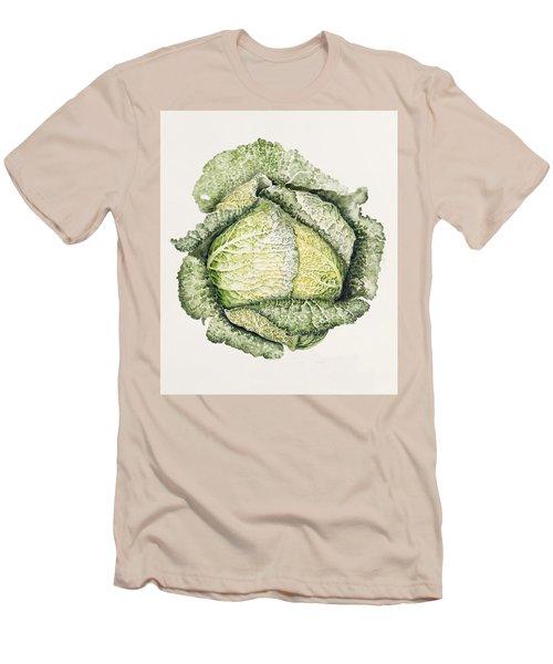 Savoy Cabbage  Men's T-Shirt (Slim Fit) by Alison Cooper