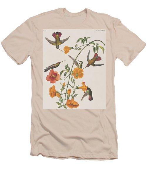Mango Humming Bird Men's T-Shirt (Slim Fit) by John James Audubon