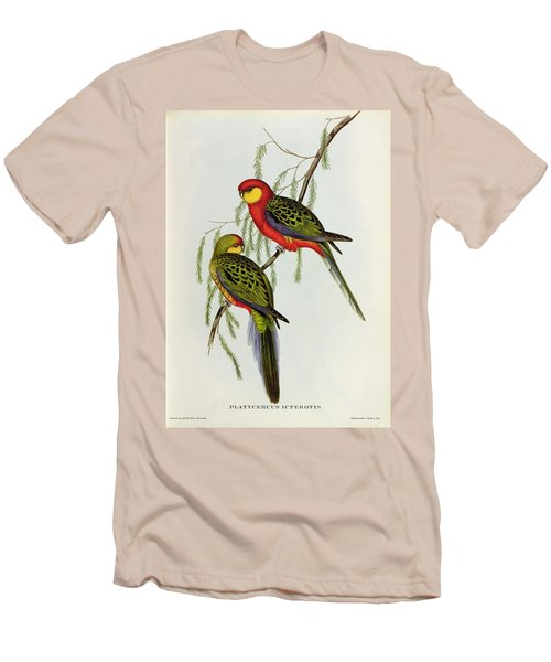 Platycercus Icterotis Men's T-Shirt (Slim Fit) by John Gould