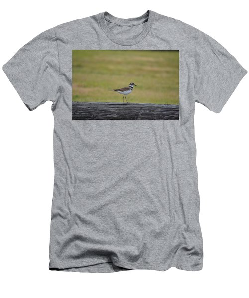 Killdeer Men's T-Shirt (Slim Fit) by James Petersen