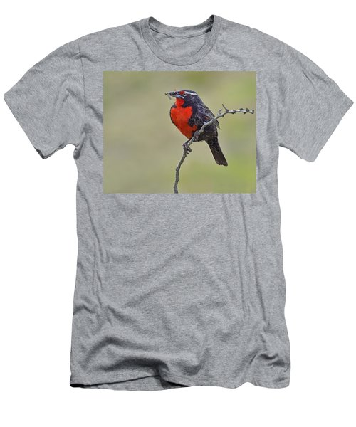 Long-tailed Meadowlark Men's T-Shirt (Slim Fit) by Tony Beck
