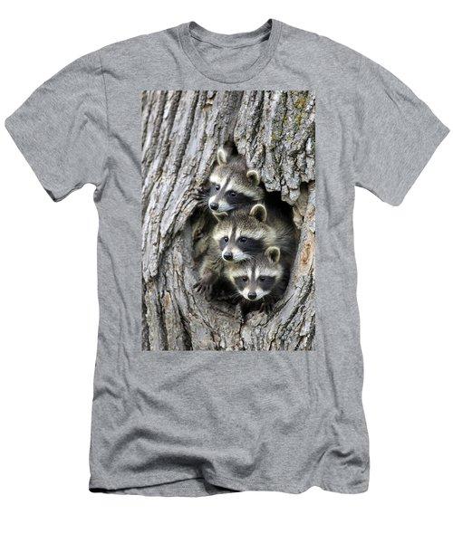 Raccoon Trio At Den Minnesota Men's T-Shirt (Slim Fit) by Jurgen & Christine Sohns