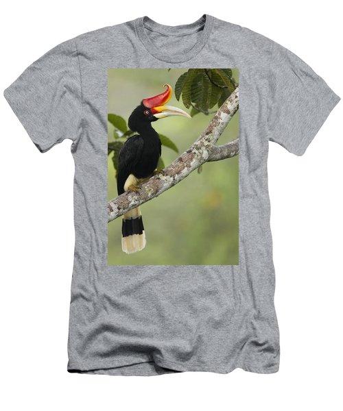 Rhinoceros Hornbill Female Sepilok Men's T-Shirt (Slim Fit) by Sebastian Kennerknecht