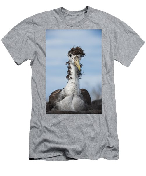 Waved Albatross Molting Juvenile Men's T-Shirt (Slim Fit) by Pete Oxford