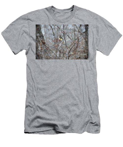Cedar Wax Wing 3 Men's T-Shirt (Slim Fit) by David Arment