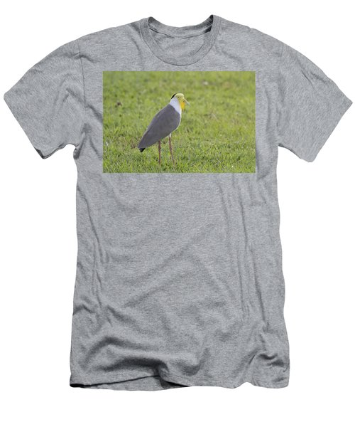 Masked Lapwing Men's T-Shirt (Slim Fit) by Douglas Barnard