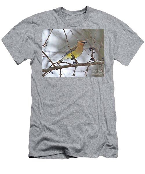Cedar Wax Wing-2 Men's T-Shirt (Slim Fit) by Robert Pearson