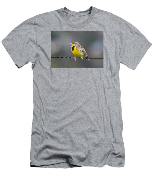 Meadowlark On Barbed Wire Men's T-Shirt (Slim Fit) by Marc Crumpler