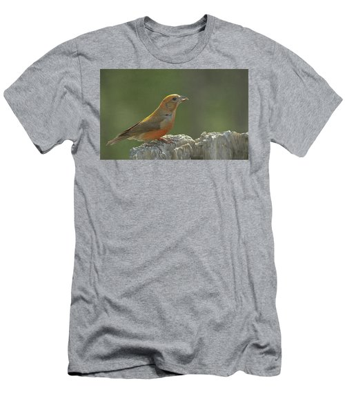 Red Crossbill Men's T-Shirt (Slim Fit) by Constance Puttkemery