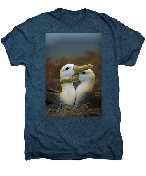 Waved Albatross Pair Bonding Galapagos Men's Premium T-Shirt by Tui De Roy