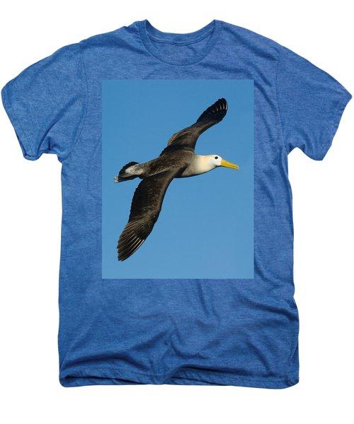 Waved Albatross Diomedea Irrorata Men's Premium T-Shirt by Panoramic Images